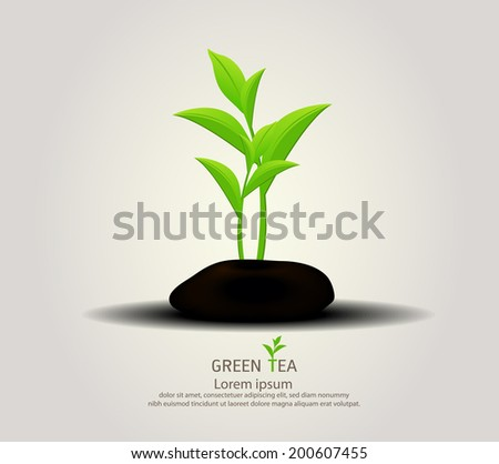 organic green tea and rock background
