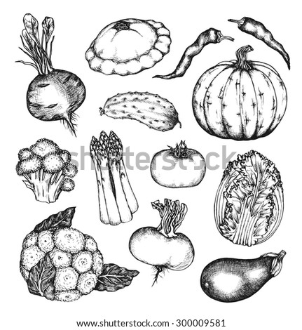 Organic natural vegetables set. Cucumber, pumpkin, cabbage, tomato, beet, hot pepper, turnip, cauliflower, eggplant, broccoli, asparagus. Collection of hand drawn design elements. Set 2 - stock vector