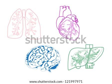 Organs - stock vector
