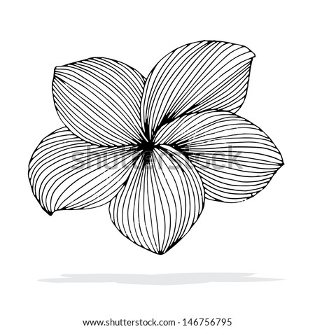 Original drawing of Frangipani flower with shadow on simple white background.  (Plumeria), Hawaii, Bali (Indonesia), Shri-Lanka Tropical Necklace Flowers. Vector Illustration  - stock vector