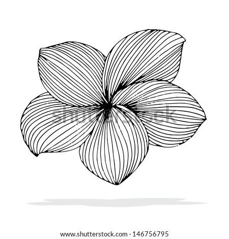 Frangipani Flower Drawing Original Drawing of Frangipani