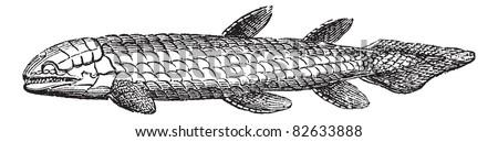 Osteolepis or Bone Scale fish isolated on white, vintage engraved illustration. Trousset encyclopedia (1886 - 1891). Extinct fish. - stock vector