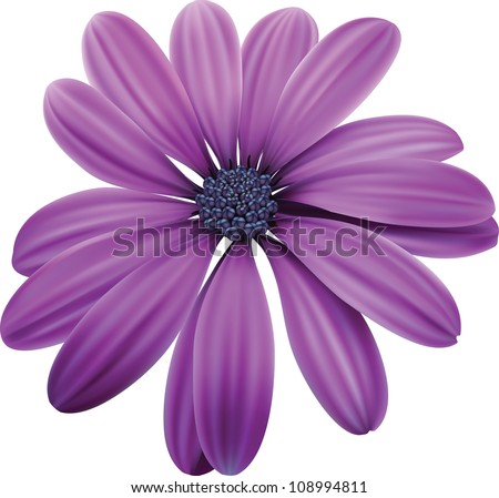 purple flower stock images, royaltyfree images  vectors, Beautiful flower