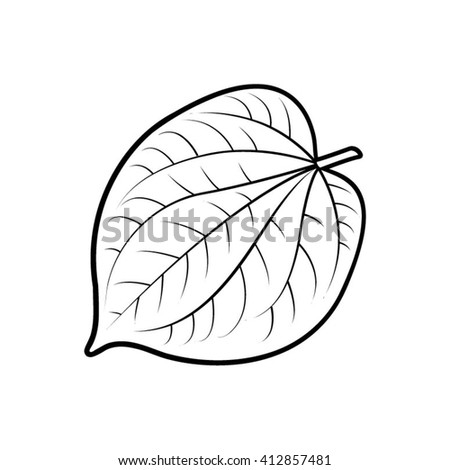 Harry Potter Hogwarts Acceptance Letter in addition Calves Clipart together with Three Roses Leaves On White Background 354575957 further Galion Espagnol also Outline Betel Leaf Vector Illustration 412857481. on herb clip art