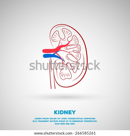 Outline Kidney illustration. Template design  - stock vector