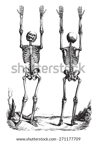 Outline of a Theory and anatomical nomenclature, vintage engraved illustration.  - stock vector
