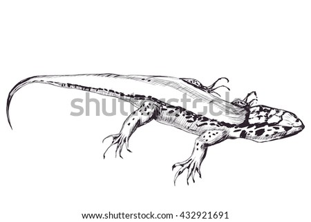 outline of lizard isolated on white background. Graphic stylized. vector illustration. pencil drawing sketch - stock vector
