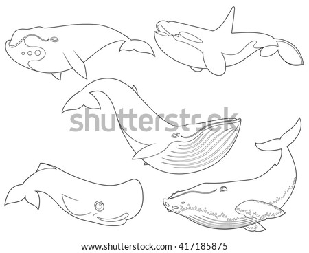 Outline vector illustration of set cartoon cute whales on white background for coloring book, sea animals set, collection of sea creatures - stock vector