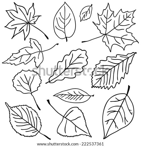 Outlines of leaves. - stock vector