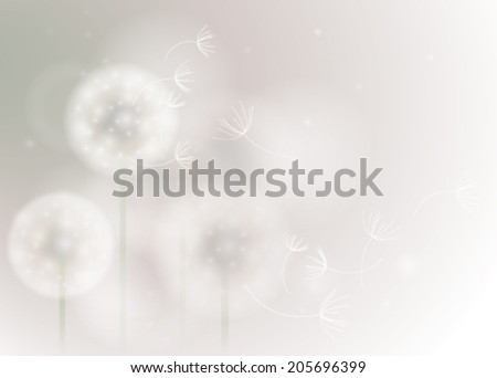 Overblown dandelion / Softly background with fluffy white flowers  - stock vector