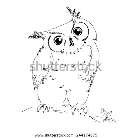 Owl hand drawing sketch - stock vector