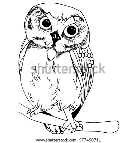 Owl illustration - owl drawing vector on simple white background