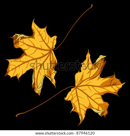 Pair of Falling Down Maple Leafs on Black Background. Vector Illustration - stock vector