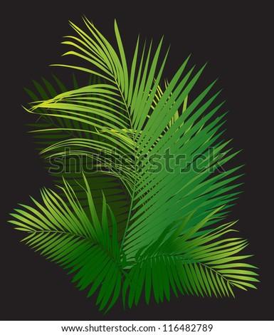 palm branch (tropical plants vector illustration) - stock vector