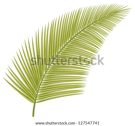 palm leaf (leaf of palm tree) - stock vector