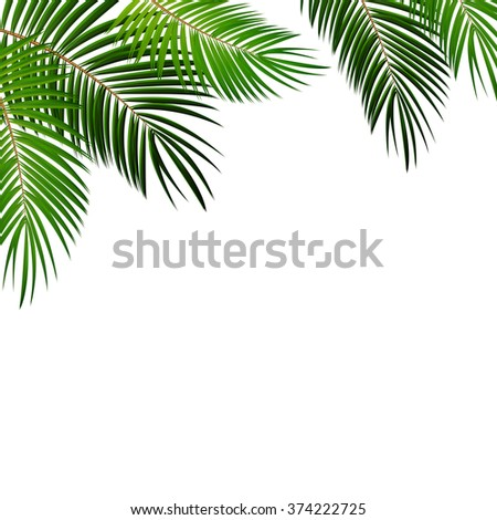 Palm Leaf on White Background with Place for Your Text Vector Illustration EPS10 - stock vector