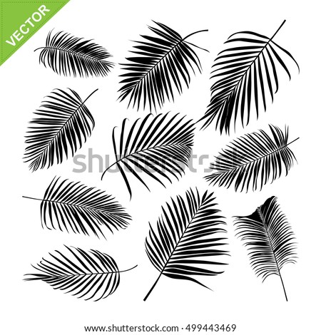 Palm leaves silhouettes vector