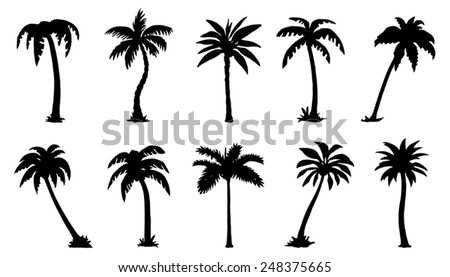 palm silhouttes on the white background - stock vector