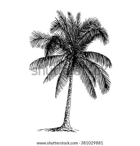Palm sketch. Hand drawn vector illustration. - stock vector