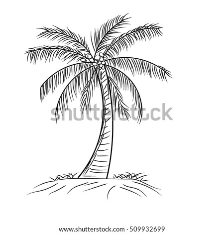 palm tree coconut with leaves, Hand drawn style design in outline monochrome contour on white background Vector illustration