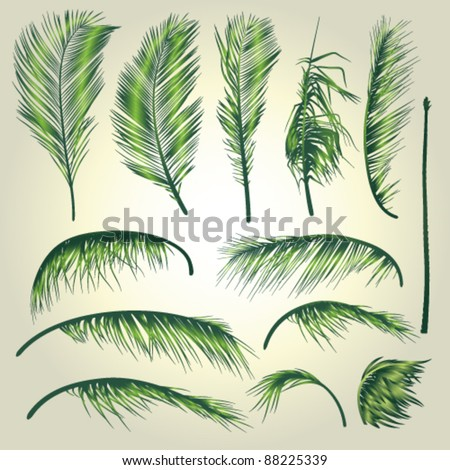 Palm Tree Leaves . A Construction Set of palm tree leaves that allows to make a variety of different palm trees. - stock vector