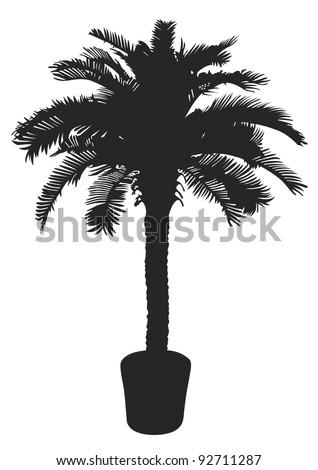 Palm tree silhouette. Vector illustration - stock vector