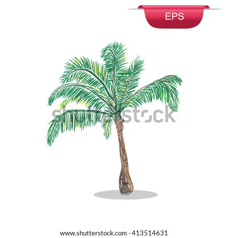 Palm tree tropical design element, sketch style, vector illustration