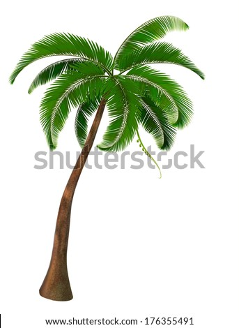Palm tree. Vector. - stock vector