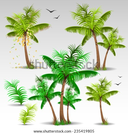 Palm trees set - stock vector