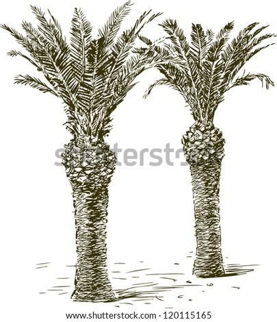 palms - stock vector