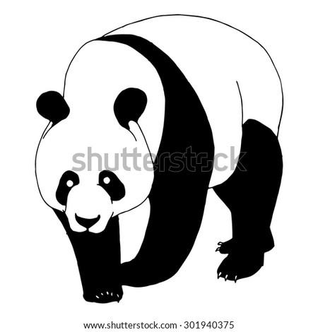 Panda bear illustration on simple white background  - stock vector