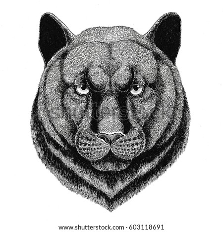 Panther Puma Cougar Wild cat Hand drawn vector image for tattoo, emblem, badge, logo, patch