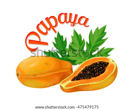 Papaya. Vector illustration made in a realistic style. Isolated on white background.
