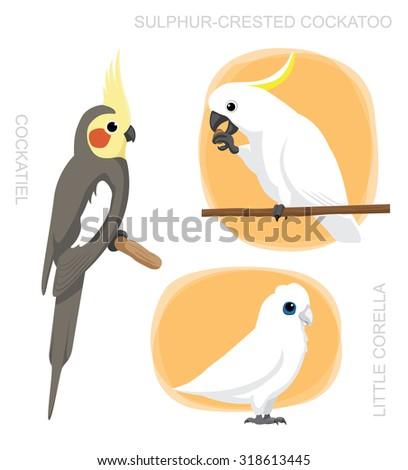Parrot Cockatiel Corella Cockatoo Cartoon Vector Illustration - stock vector