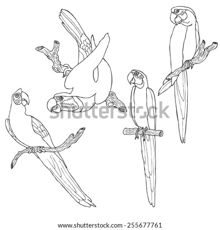 Parrot collection in vector - stock vector