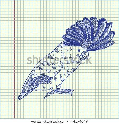 Parrot. Hand drawn vector stock illustration. Sheet ball pen drawing. - stock vector
