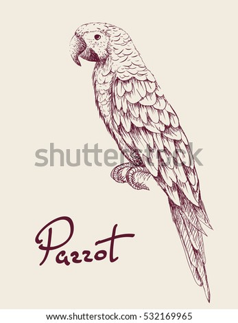Parrot isolated on white background.Hand drawn work.Exotic bird