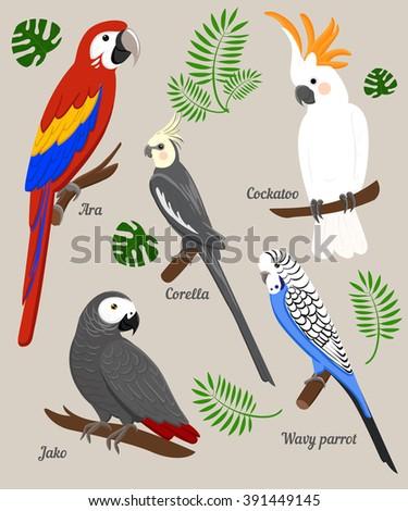 Parrots Cartoon Vector Illustration. Parrot set Exotic birds  - stock vector