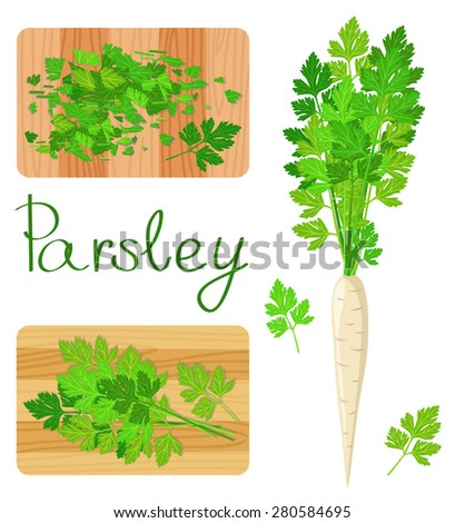 Parsley herb. entire and sliced - stock vector