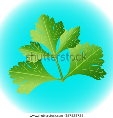 Parsley herb isolated on blue background. Vector illustration. - stock vector