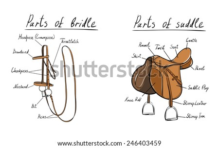 Parts of saddle and bridle - stock vector