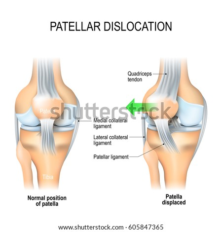 knee stock images, royalty-free images & vectors | shutterstock, Muscles