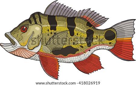 peacock bass - stock vector