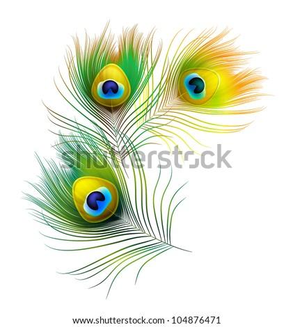 peacock feather - stock vector