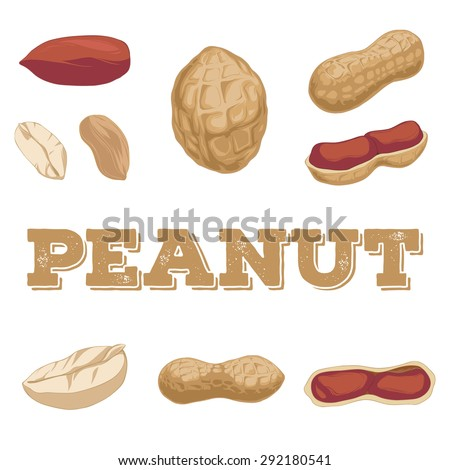 Peanut hand-drawn set isolated on a white background.