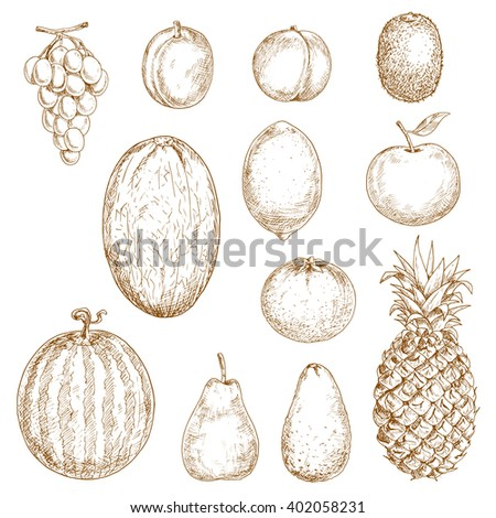 Pear and lemon, orange and apple, plum and grape, peach and pineapple, kiwi and watermelon, avocado and melon fruits isolated sketches. For vegetarian dessert or recipe book, health food themes - stock vector