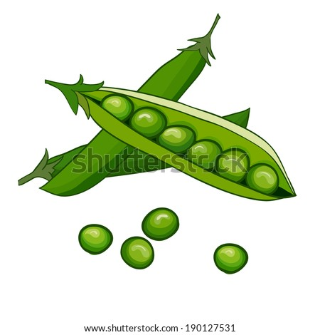 Peas vector on white - stock vector