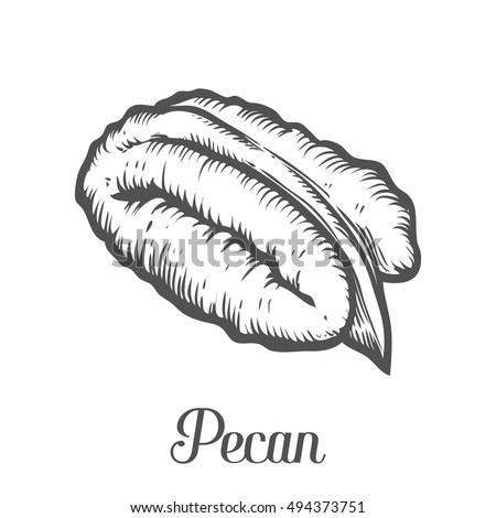 pecan icon stock photos royaltyfree images amp vectors