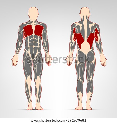 Pectoralis, triceps and oblique muscles. Fitness training, man muscles workout.
