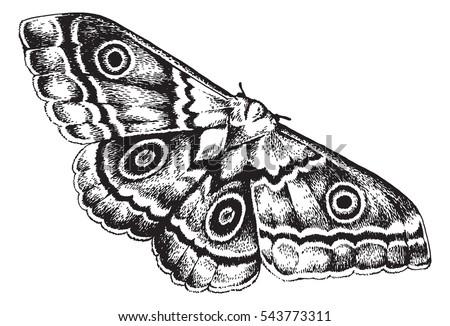 Moth drawing - photo#49